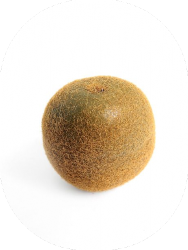 Artificial Fruit Kiwi x 2